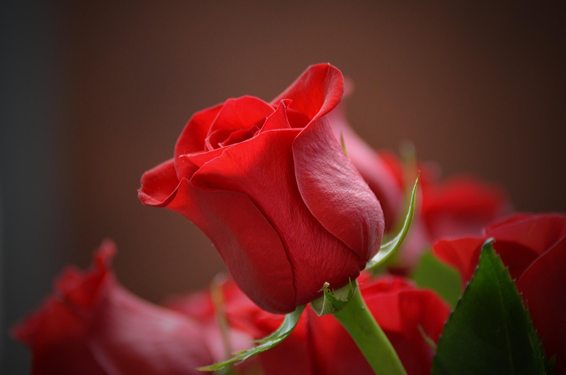 Blumen – ein schnelles & schönes Geschenk für jedermann auf ratgeber-blogger.de