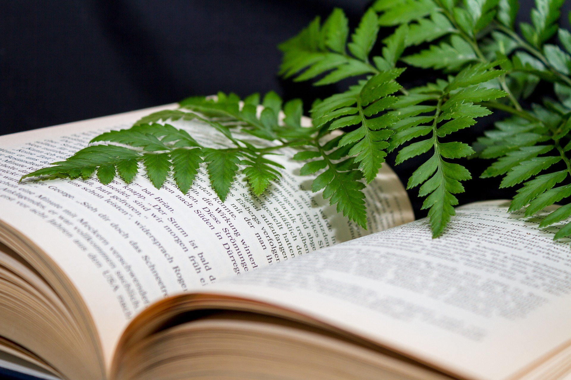Pflanzen bestimmen mit einer Pflanzendatenbank auf ratgeber-blogger.de