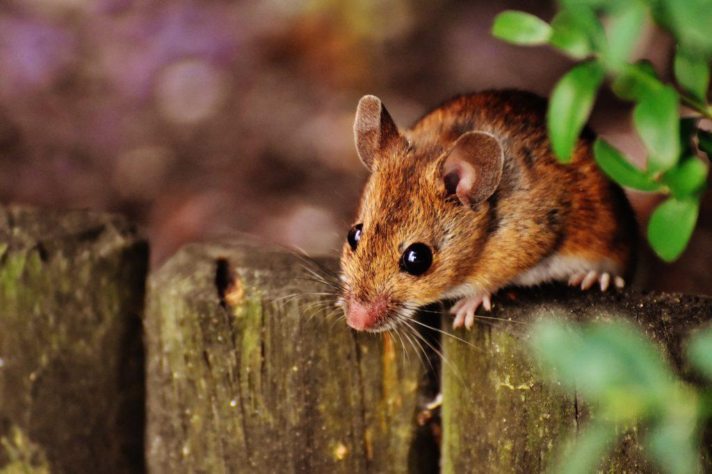 Ist der Fuchsbandwurm für den Mensch gefährlich? auf ratgeber-blogger.de