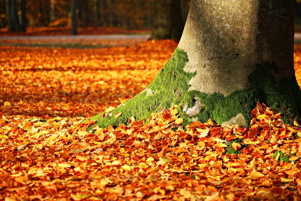 Das geheime Leben der Bäume auf ratgeber-blogger.de
